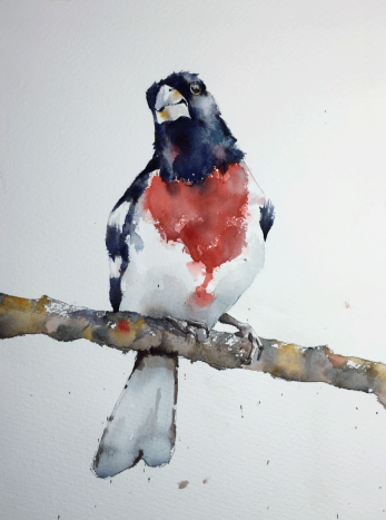 "Rose-breasted grosbeak. Michele Clamp. Watercolour 14""x11"""